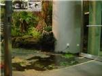 情景还原-仿真植物仿真水迹